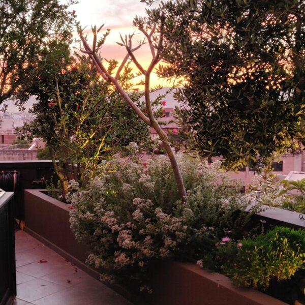 Penthouse Rooftop garden